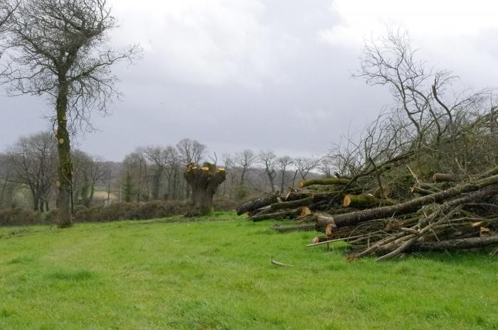 Bois adain déchiquetable Mayenne Bois
