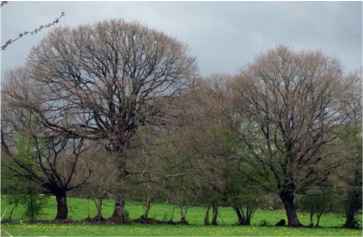 Illustration - Filière bois - Mayenne Bois Énergie